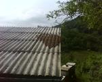 Roj na streche