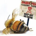 Stanovenie cieľa ochrany včiel medonosných v kontexte preskúmania usmerňovacieho  dokumentu o včelách z roku 2013